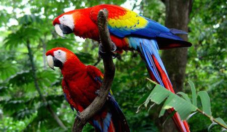 https://lostbeachtours.com/wp-content/uploads/2014/05/carara-birdwatching-jaco--450x263.jpg