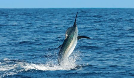 https://lostbeachtours.com/wp-content/uploads/2015/07/Quepos-marlin-sportfishing-450x263-1-450x263.jpg