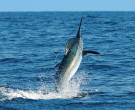 http://lostbeachtours.com/wp-content/uploads/2015/07/Quepos-marlin-sportfishing-450x263-1-450x368.jpg