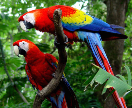 http://lostbeachtours.com/wp-content/uploads/2015/07/carara-birdwatching-jaco--450x368.jpg
